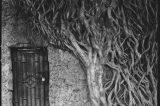 La fotografía de Carlos Saavedra (O cómo las historias producen imágenes)